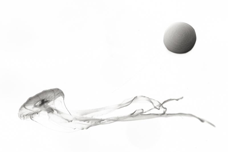 SEA MOON 2 - Prix de la Photographie Paris